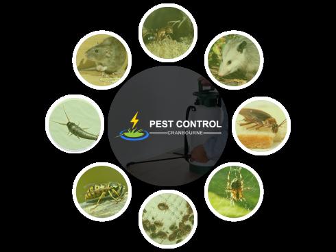 Pest Control Cranbourne
